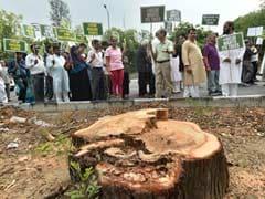 दिल्ली में 19 जुलाई तक पेड़ कटाई पर रोक