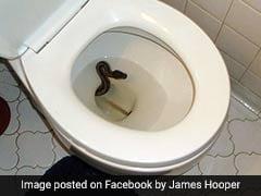 Viral Photos: टॉयलेट सीट के अंदर बैठा था अजगर, फिर हुआ ये