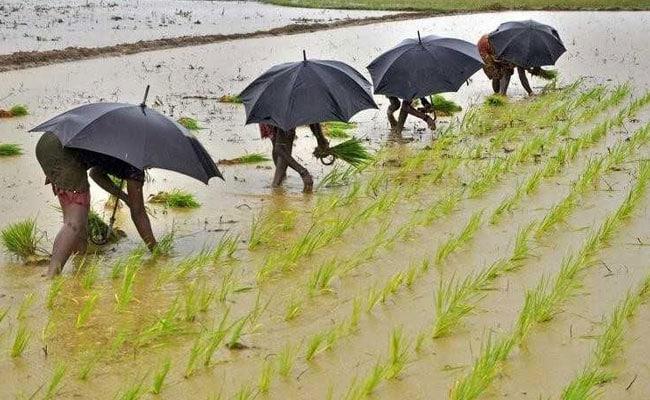 कमजोर मॉनसून के चलते 55 लाख हेक्टेयर तक घटी खरीफ फसलों की बुवाई