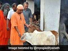 मॉब लिंचिंग पर UP के सीएम योगी आदित्यनाथ का बयान, 'इंसान भी जरूरी और गाय भी'