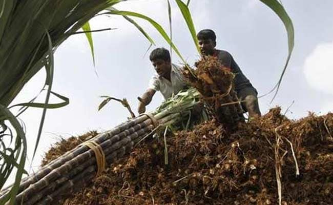 Government announces Rs 8000 crore bailout package to cash-starved sugar mills