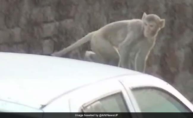 दिल्ली में बंदरों के बढ़ते उत्पात से उपराष्ट्रपति भी परेशान, राज्यसभा में सुनाया दुखड़ा