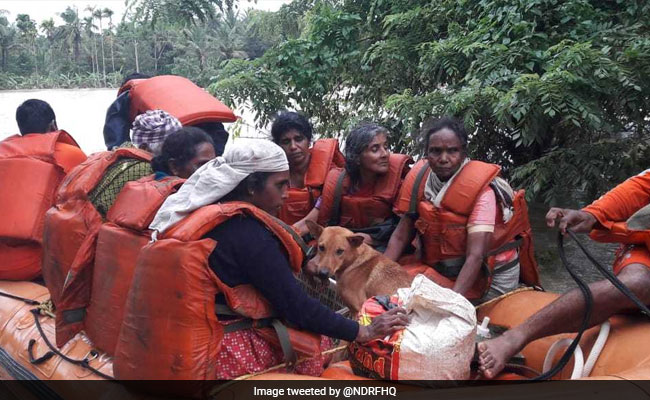 Kerala Woman Refuses Flood Rescue Without Her 25 Dogs-6633