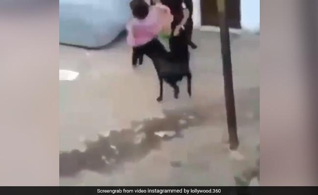 Bakrid 2018: बाहर टहल रही थीं लड़कियां, पीछे से आया बकरा और किया ये काम, Video हुआ वायरल