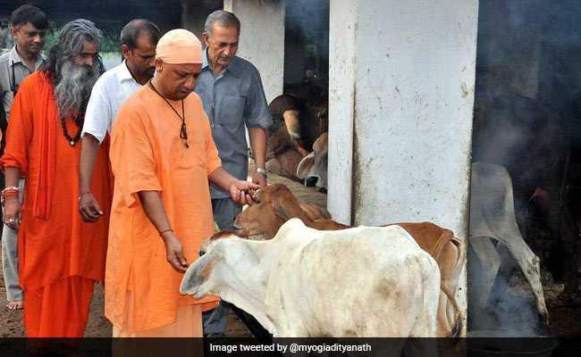 योगी आदित्यनाथ ने हिंदू संतों को कम से कम पांच गाय या बैल पालने की सलाह दी