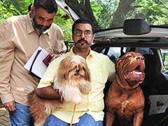 Two Woofs For Muttkind: Bengaluru Dogs Get Their Own Cab Service