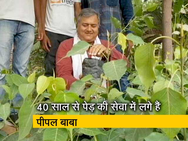 Video : बनेगा स्वच्छ इंडिया:  Give Me Trees के संस्थापक 'पीपल बाबा' से खास मुलाकात