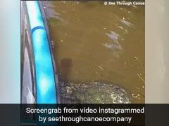 Canoe Gets Stuck On Giant Alligator's Back In Florida. Watch Scary Video