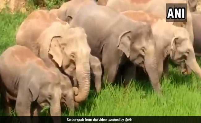 झारखंड के एक गांव में घुसा हाथियों का झुंड, तबाह कर दी फसलें; देखें-VIDEO