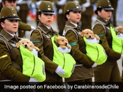 Adorable Police Puppies Were The Real Stars Of Chile's Military Parade