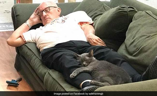 Purr-fectly Adorable Pics Of Volunteer Napping Next To Cats At Shelter Go Viral