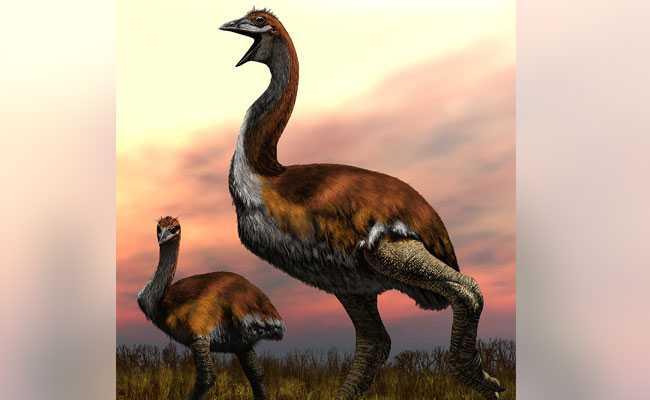 Biggest Bird Confusion Over. It's Vorombe Titan Of Madagascar, Says Study