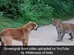 कुत्ते का शिकार करने आया था भूखा तेंदुआ, फिर हुआ कुछ ऐसा, देखकर आ जाएगी हंसी, देखें VIDEO