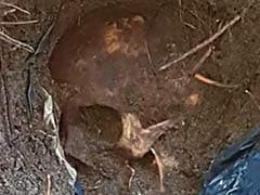 """""""400-500 Bodies Likely"""" In New Mass Grave Found In Mexico"""