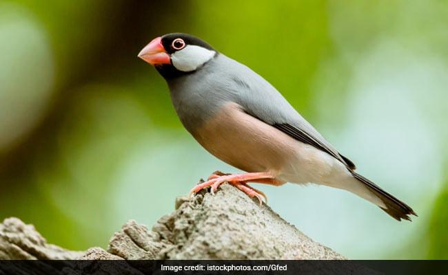 Revenue Officials Seizes Exotic Birds Smuggled Into India From Bangladesh