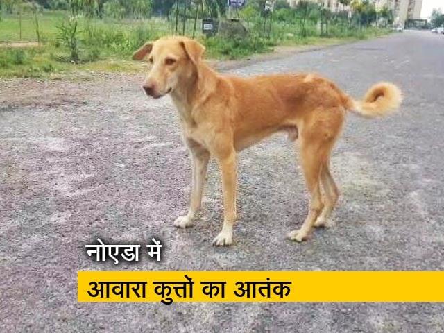 Stray Dogs: Latest News, Photos, Videos on Stray Dogs - NDTV COM