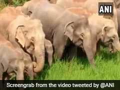 रेलवे ट्रैक पर हाथियों को हादसे से बचाने के लिए प्लान