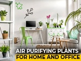 Video : 5 Air Purifying Plants For Home And Office