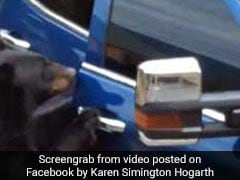 Watch: Hungry Bear Opens Car Door Like A Boss, Steals Food