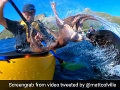 नाव चला रहा था शख्स, गुस्से में ऑक्टोपस ने मार दिया थप्पड़, देखें ये मजेदार VIDEO