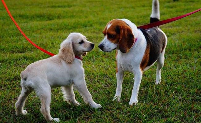 A Hyderabad Dump Yard Transformed Into India's First Exclusive Dog Park