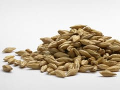 A Rich Source Of Dietary Fiber, Here's Why Barley Should Be Included In Your Diet