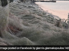 In Pics: A Greek Town Infested With Spiders, Covered In Giant Webs