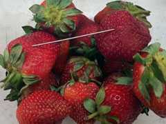"""Just Not On"": Australia PM Amid Scare Over Needles In Strawberries"