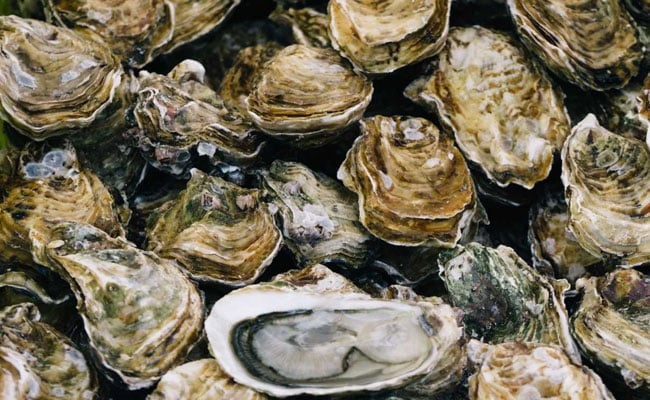 Here's Why Researchers Are Looking At Oysters For Tracking Pollution