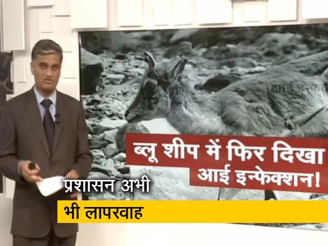Videos : ब्लू शीप में फिर दिखा आई इन्फेक्शन!