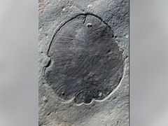 'Fat' Traces Confirm Weird Fossils Were Earliest Animals