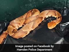 Connecticut Man Finds Venomous Snake Inside Garbage Bin At Home