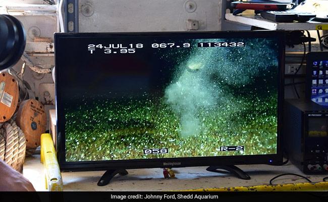 Aquarius Project: Scientists Went Looking For Meteorites ...