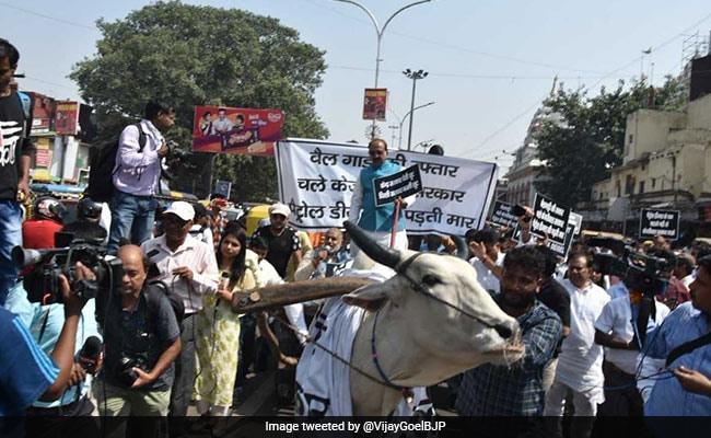 पेट्रोल-डीजल को लेकर विजय गोयल ने दिल्ली सरकार के खिलाफ बैलगाड़ी चलाकर किया प्रदर्शन