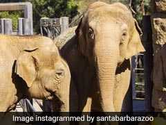 """Broken Hearts"": Beloved Indian Elephant Euthanised In California Zoo"