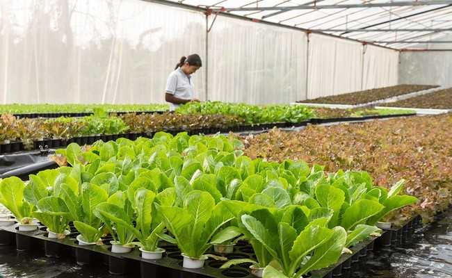'Fully Organic' Sikkim Wins Top UN-Backed Award