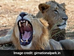 """Asiatic Lion Roars Louder"": Prakash Javadekar After Population Rises"