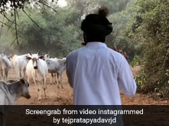 Watch Tej Pratap Yadav Play The Flute To Herd Of Cows While Dressed As Krishna