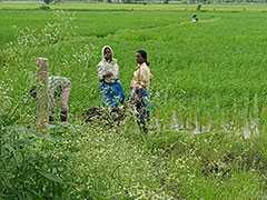 অতি অল্প সুদে ৭,০০০ কোটি টাকা কৃষক ঋণের ঘোষণা রাজ্য সরকারের