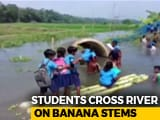Video : No Bridge, Assam Students Cross River On Banana Stems To Reach School