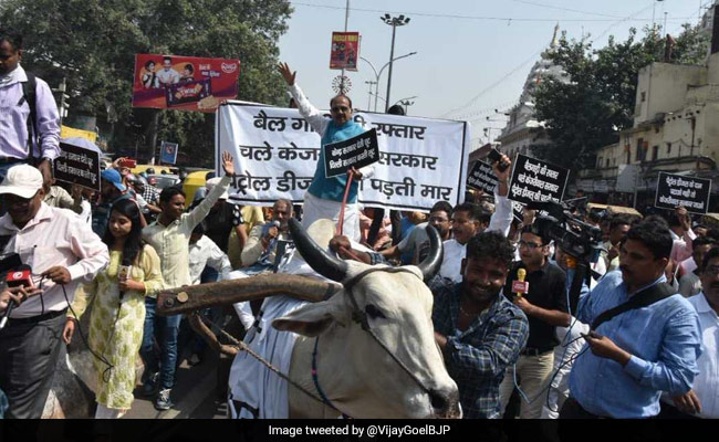 With Bullock Cart Ride, Minister Confronts Arvind Kejriwal On Fuel Price