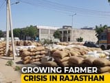 Video : BJP's Promised Aid For Bajra Farmers May Yield Little In Rajasthan Polls