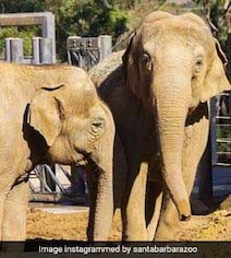 'Broken Hearts': Beloved Indian Elephant Euthanised In California Zoo