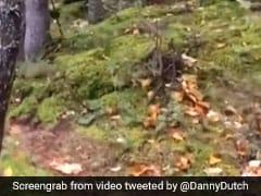 जंगल के सांस लेने का वीडियो हुआ था VIRAL, अब सच्चाई आई सामने