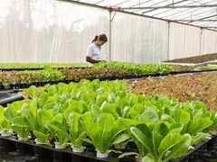 'Fully Organic' Sikkim Wins Top UN-Backed Award