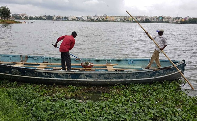 Thousands Of Snails Dying In Bengaluru Lake Baffles Experts