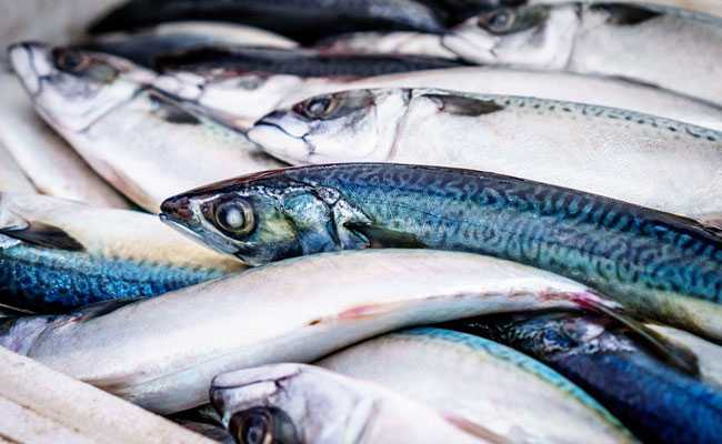 Climate Change, Overfishing Influence Mercury Accumulation In Fish: IIT Hyderabad, Oxford Study