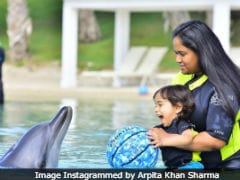 When Arpita Khan Sharma Tried 'Breaking The Ice' Between Ahil And A Dolphin In Dubai