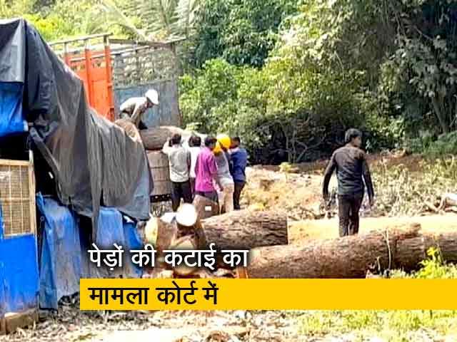 Videos : मुंबई में हजारों पेड़ों को बचाने की चल रही मुहिम, मामला पहुंचा कोर्ट