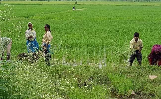 नोटबंदी पर कृषि मंत्रालय का यू-टर्न, पहले माना किसानों पर पड़ा बुरा असर, अब कही यह बात...